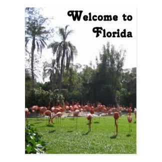 Boa vinda ao cartão dos flamingos de Florida Cartoes Postais