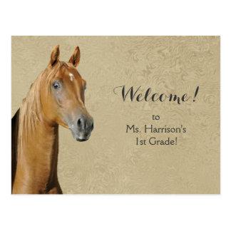 Boa vinda do estudante do cavalo do cartão do cartão postal