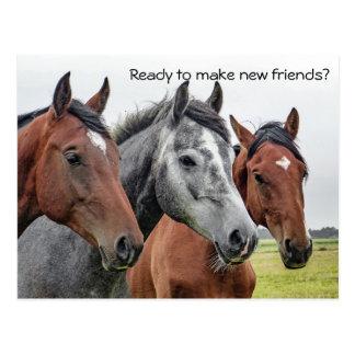 Cartão Postal Boa vinda nova dos cavalos dos amigos do cartão do