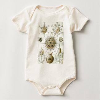 Body Para Bebê A arte da natureza por Ernst Haeckel