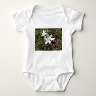 Body Para Bebê A estrela de Bethlehem floresce o umbellatum do