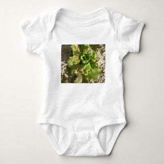 Body Para Bebê Alface fresca que cresce no campo. Toscânia,