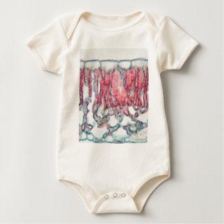 Body Para Bebê Folha do algodão sob o microscópio