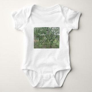 Body Para Bebê Os ramos de oliveira com primeiros brotam