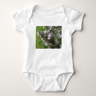 Body Para Bebê Planta de Rosemary com as flores em Toscânia,