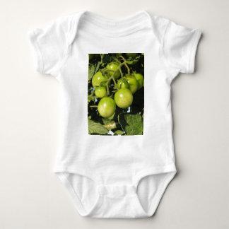 Body Para Bebê Tomates verdes que penduram na planta no jardim