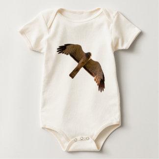Body Para Bebê Um Harrier do norte sobe em cima