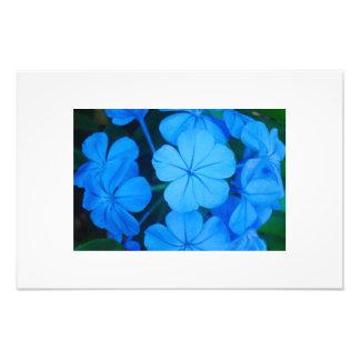 Bola de flores azuis impressão fotográficas