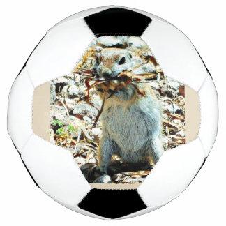 """Bola De Futebol Do """"bola de futebol do esquilo à terra de Momma"""