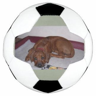 Bola De Futebol Rhodesian_Ridgeback_puppy