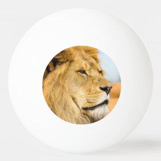 Bola De Ping-pong Leão grande que olha longe