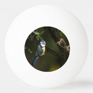 Bola De Ping-pong Melharuco euro-asiático do bluet, caeruleus dos