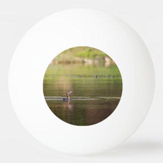 Bola De Ping-pong Pássaro do Cormorant que nada pacificamente