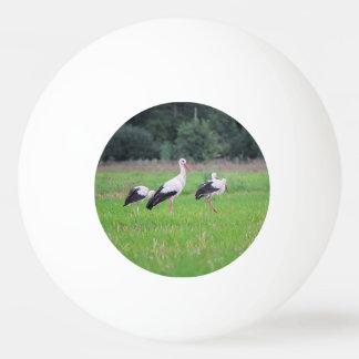 Bola Para Ping Pong Cegonhas brancas da migração, ciconia, em um prado