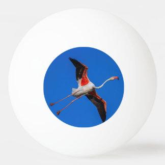 Bola Para Ping-pong Maior flamingo, roseus do phoenicopterus