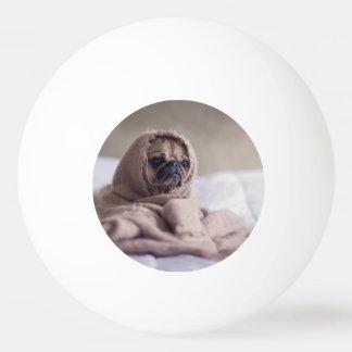 Bola Para Tênis De Mesa Cão de filhote de cachorro do Pug que afaga em uma