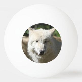 Bolinha De Ping Pong Animais polis - lobo