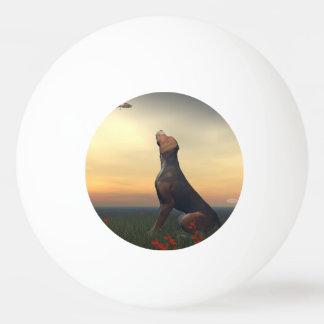 Bolinha De Ping Pong Cão tan preto que olha um vôo do pássaro