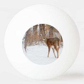 Bolinha De Ping Pong Cervos do fanfarrão do botão no campo nevado