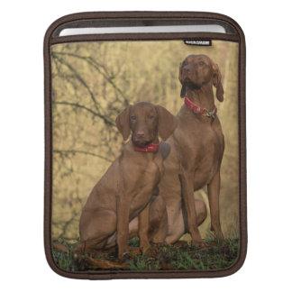 Bolsa De iPad Cães ostentando bonitos de Vizsla