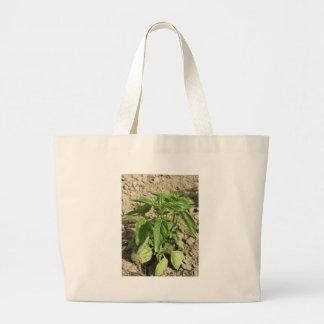 Bolsa Tote Grande Única planta fresca da manjericão que cresce no