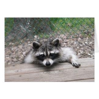 Bom cartão do Racoon do menino de Ol