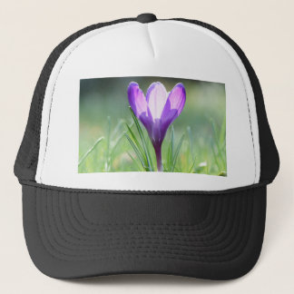 Boné Açafrão roxo no primavera