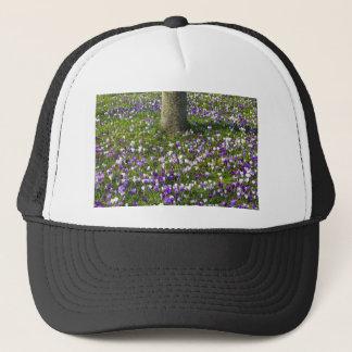 Boné Açafrões do campo de flores na grama do primavera