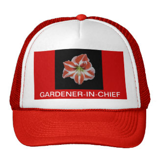 BONÉ, amaryllis listrado vermelho-e-branco, jardin Boné
