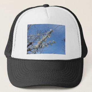 Boné Ameixa de florescência contra o céu. Toscânia,