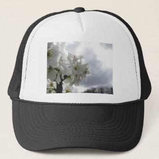 Boné Árvore de pera de florescência contra o céu