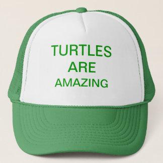 Boné as tartarugas são surpreendentes