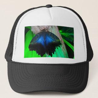 Boné Borboleta azul comum