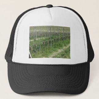 Boné Campo desencapado do vinhedo no inverno. Toscânia,