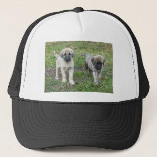 Boné Cão de filhotes de cachorro anatólio do pastor