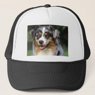 Boné Cão de pastor australiano