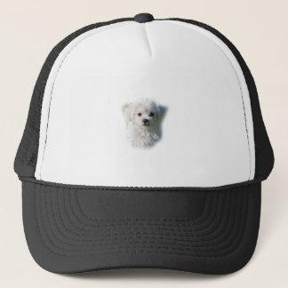 Boné Cão maltês bonito