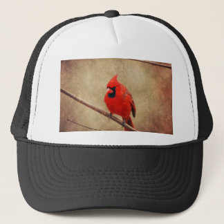 Boné Cardinal