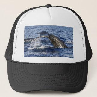 Boné Cauda da baleia