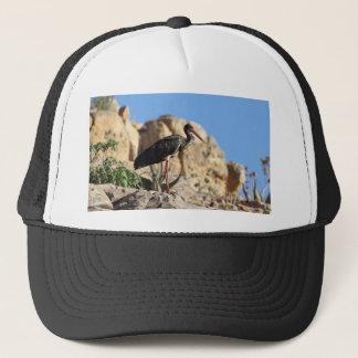Boné Cegonha preta (negro do Ciconia) em uma rocha
