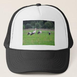 Boné Cegonhas brancas da migração, ciconia, em um prado