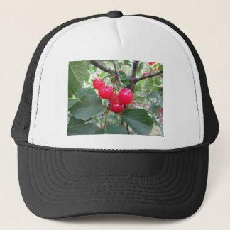 Boné Cerejas vermelhas de Montmorency na árvore no