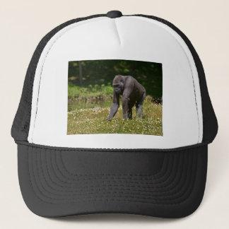 Boné Chimpanzé na grama de florescência