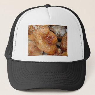 Boné Cogumelos da lagosta
