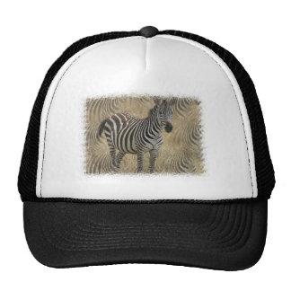 Boné de beisebol listrado da zebra