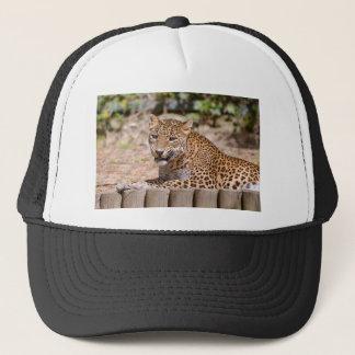 Boné Encontro do leopardo