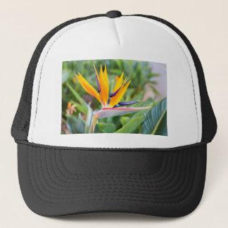 Boné Feche acima da flor do guindaste ou do reginaei do