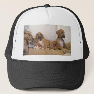 Boné Filhotes de cachorro de Azawakh