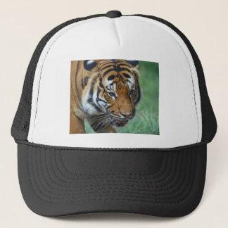 Boné Fim-acima do tigre do Malay dos alugueres