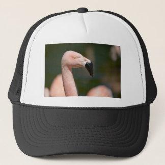 Boné Flamingo do retrato